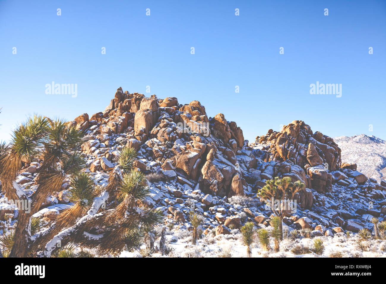 Snow Covered Boulders And Plants In The Desert Landscape Of