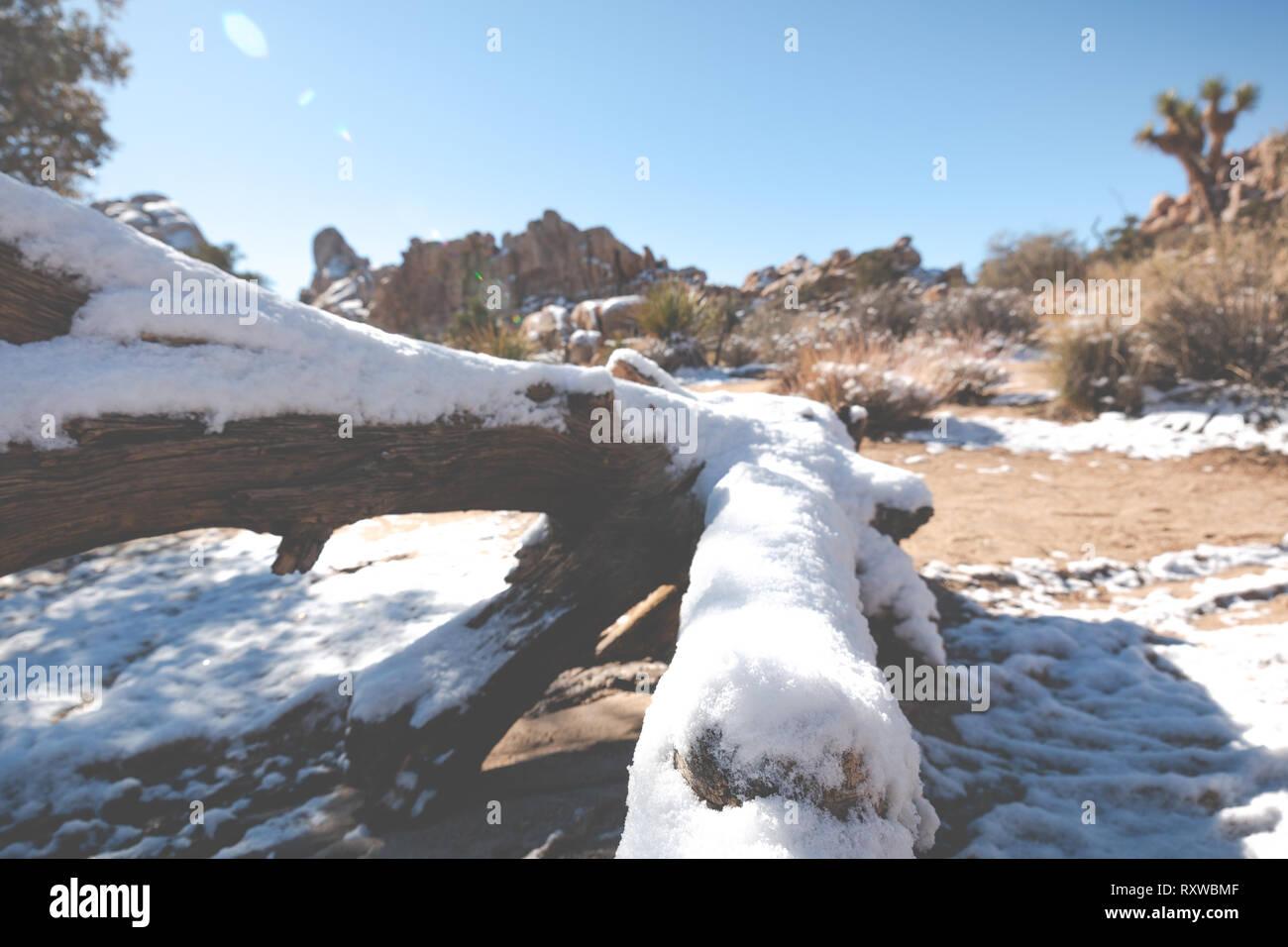 Snow Covered Log In The Desert Landscape Of Joshua Tree