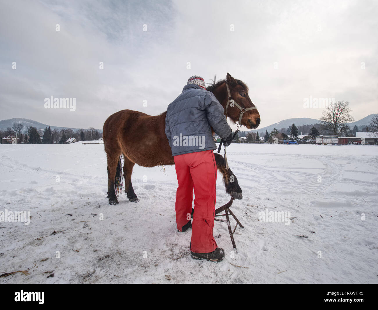 Farrier assistant keep horse with front leg on steel tripod. Regular hoof check within winter time on mountain horse farm. - Stock Image