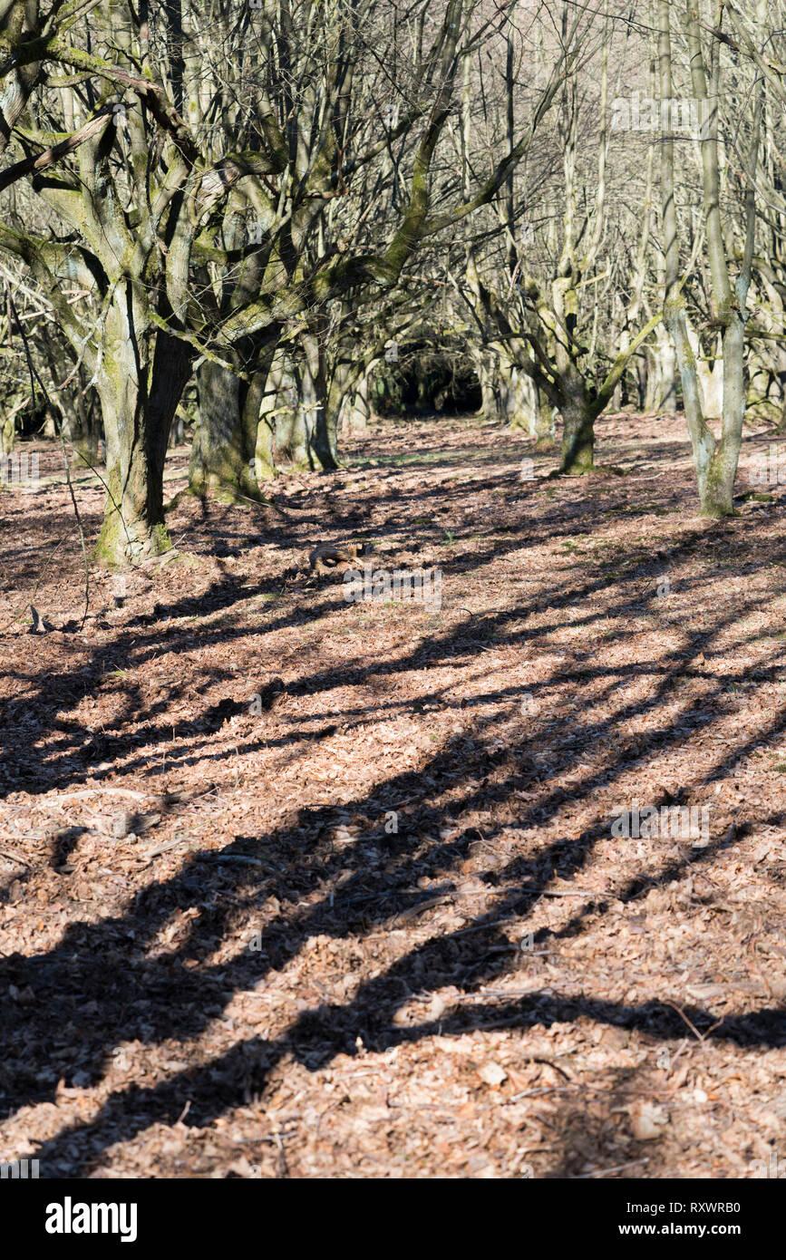 A natural burial grave site, Hofgeismar, Weser Uplands, Weserbergland, Hesse, Germany - Stock Image