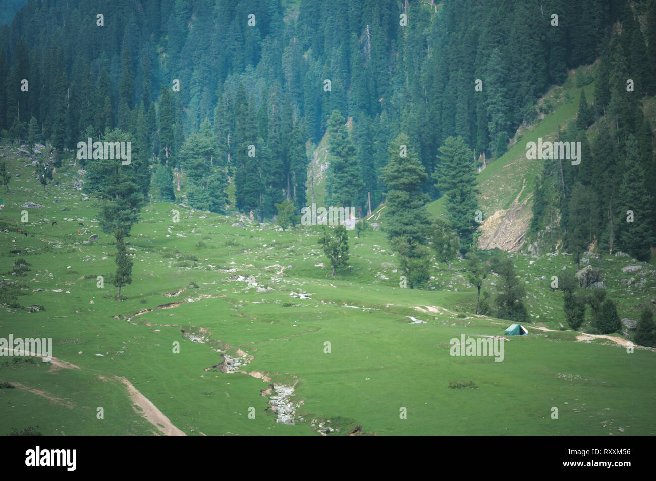 Faded moody view of camping tent set up by a group of campers in the meadows of Aru, Pahalgam in Kashmir, India - Stock Image