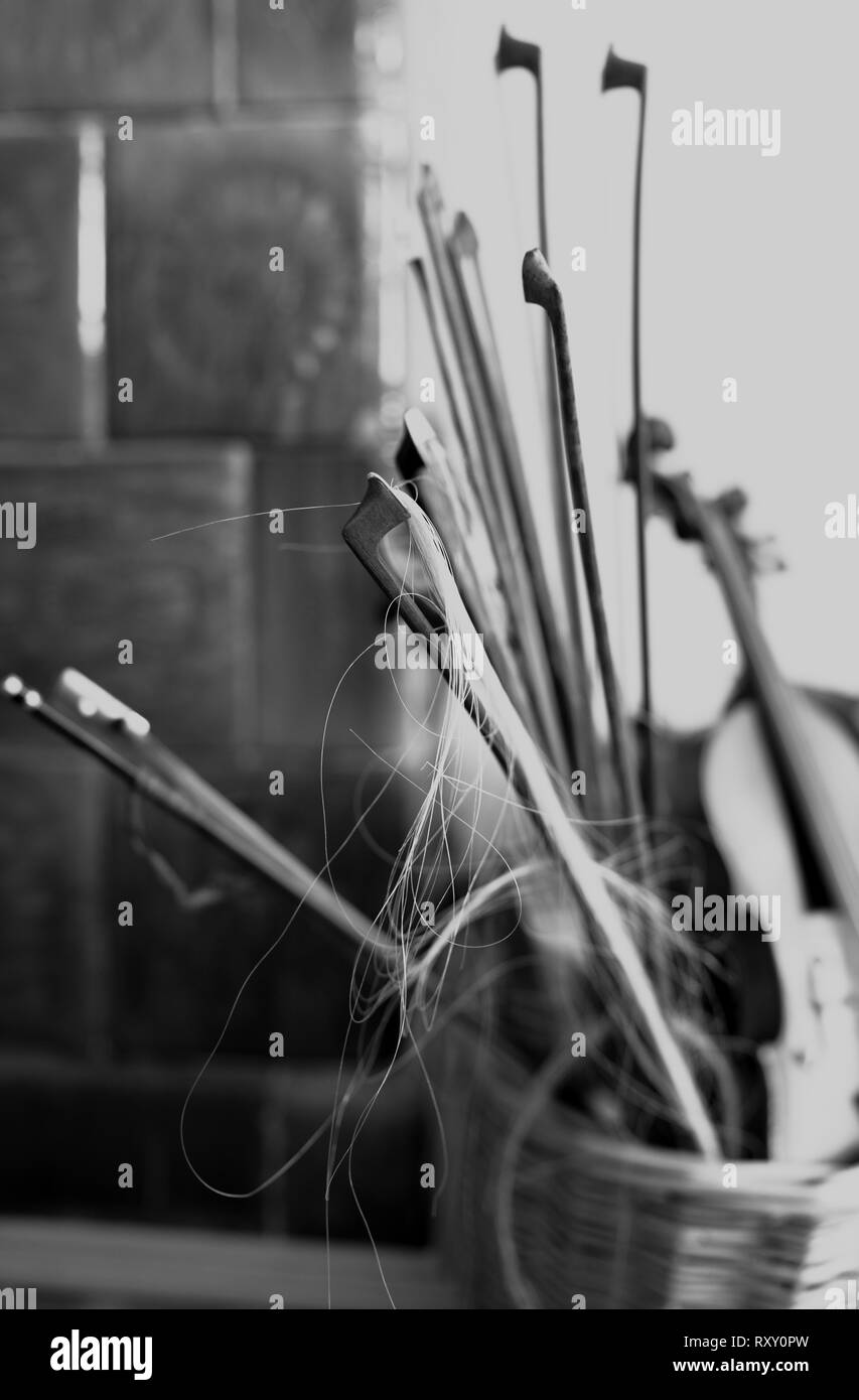Violins and bows after usage - Stock Image