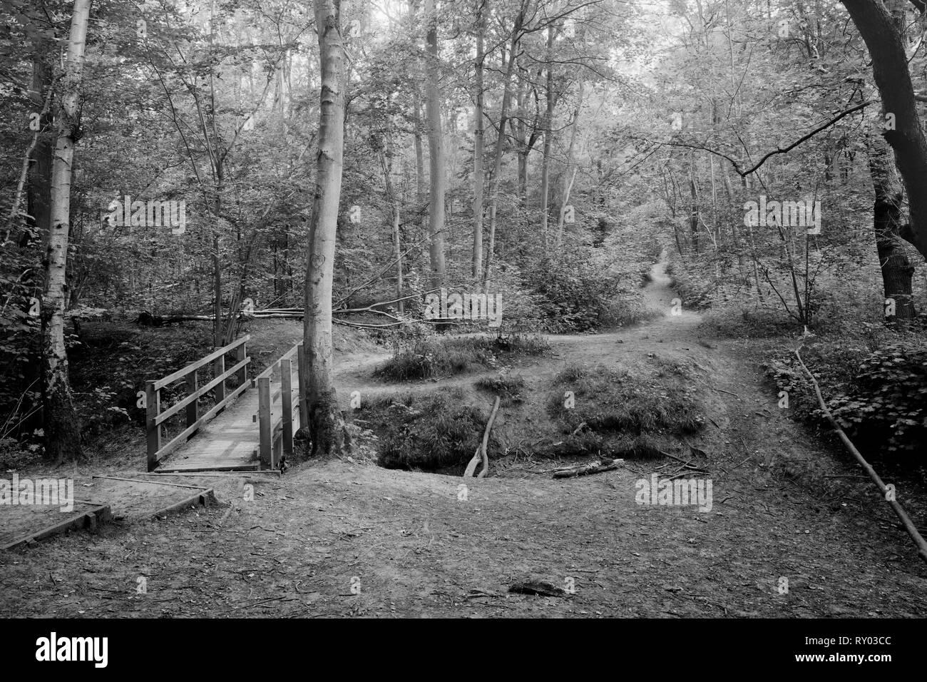 Wooden footbridge connecting Gransden Wood and Waresley Wood Cambridgeshire England - Stock Image