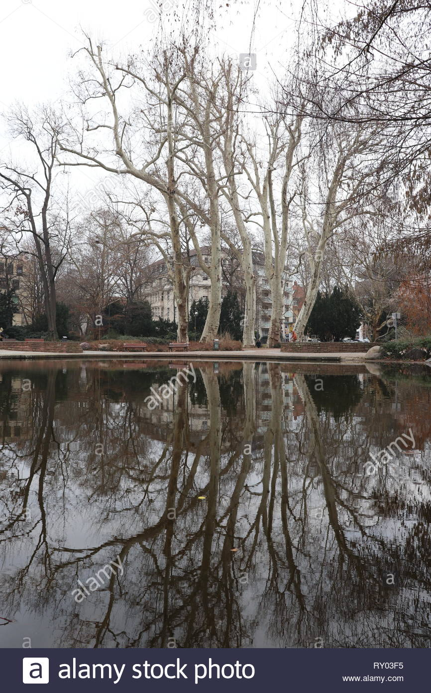 Tree and building reflected in a pond (Bockenheimer Anlage) in Frankfurt am Main, Germany Stock Photo