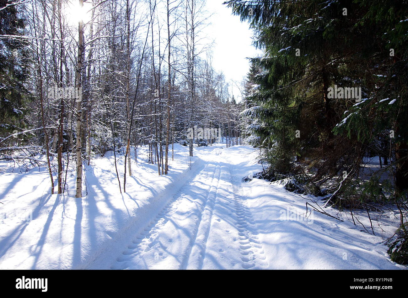 Beautiful winter landscapes in the forest on a cold and sunny day in Sweden. - Stock Image