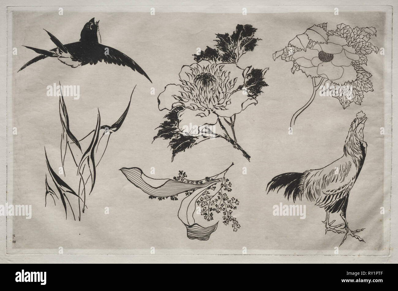 Dinner Service (Rousseau service): Swallow, Rooster and Flowers (no. 8), 1866. Félix Bracquemond (French, 1833-1914). Etching; sheet: 35.8 x 48.2 cm (14 1/8 x 19 in.); platemark: 27.5 x 42.6 cm (10 13/16 x 16 3/4 in Stock Photo
