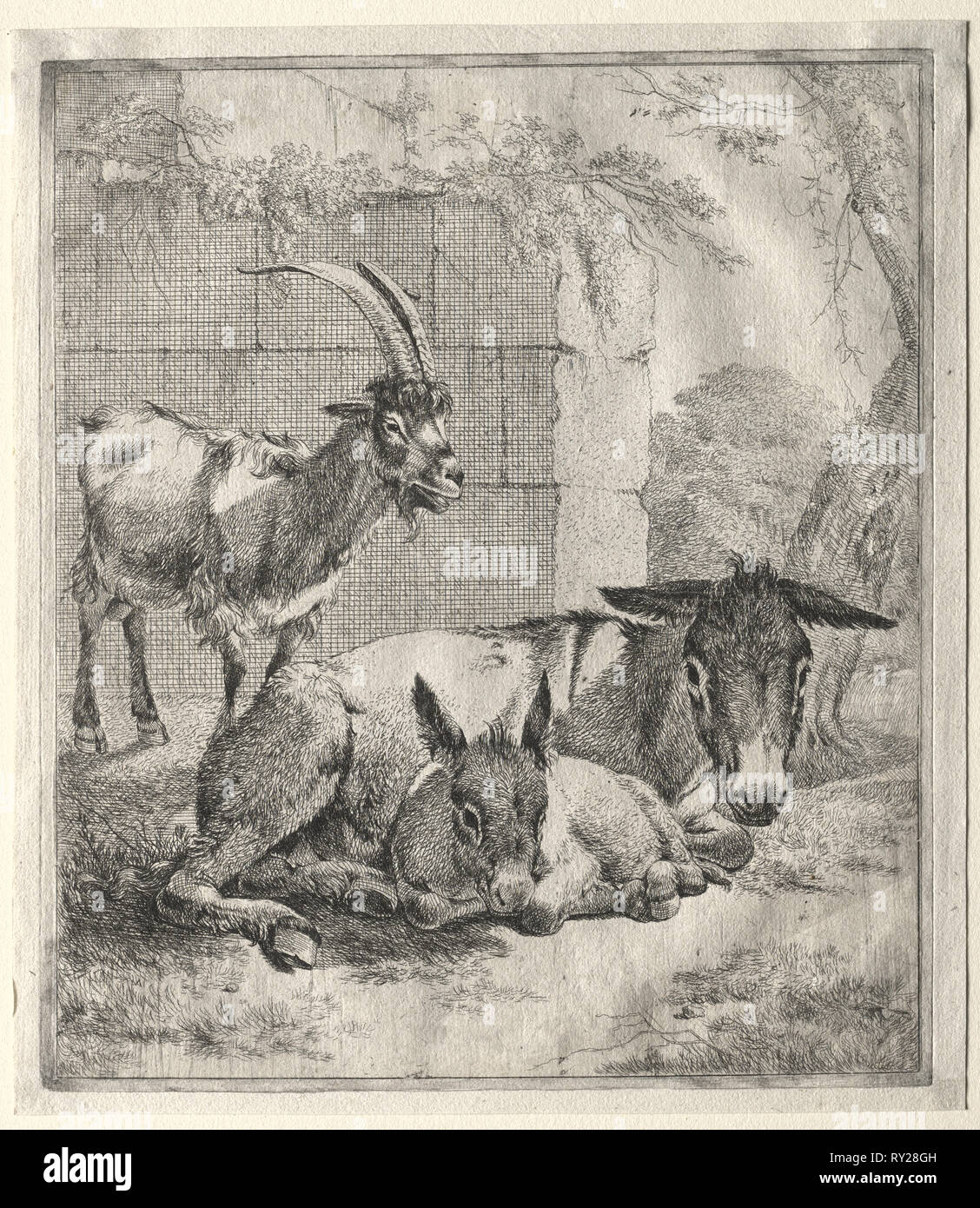 Goat and Donkeys. Johann Heinrich Roos (German, 1631-1685). Etching Stock Photo