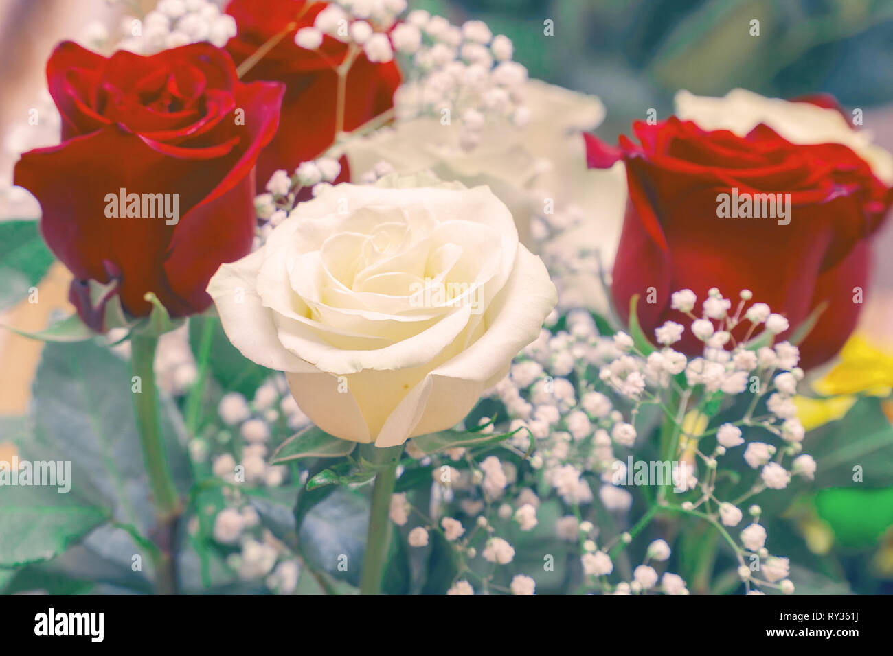 Bouquet of red and white roses. Decorative floral arrangement of white and red roses Stock Photo