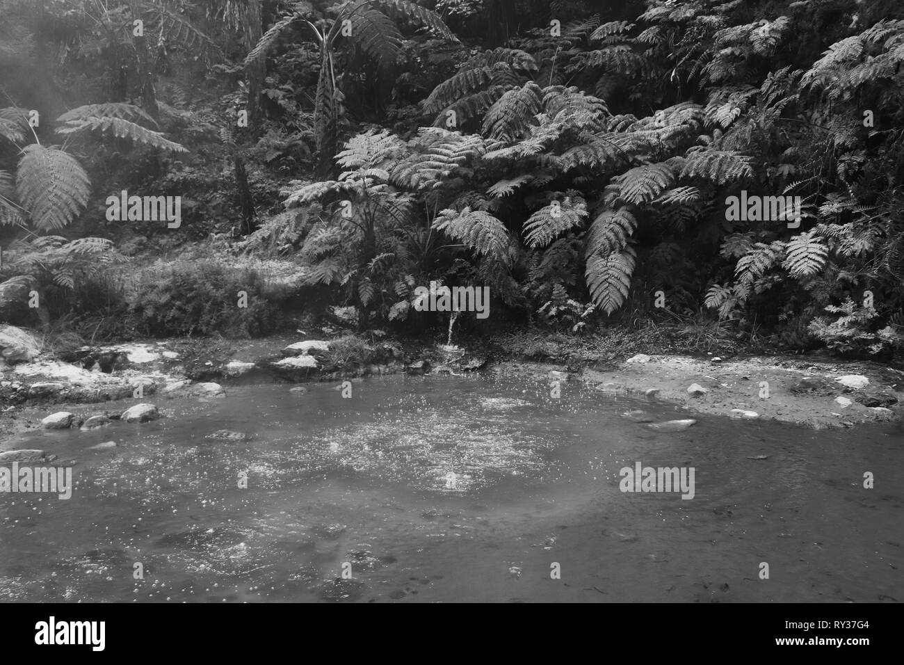Smoking fumarole and water spring in geothermal area in a forest - Stock Image