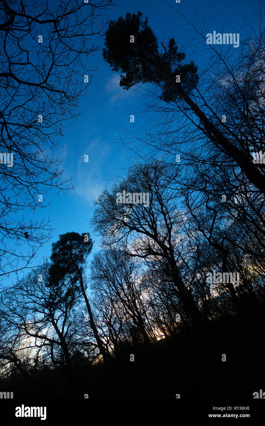Winter Leafless Trees Without Leaves Silhouette Against Sky