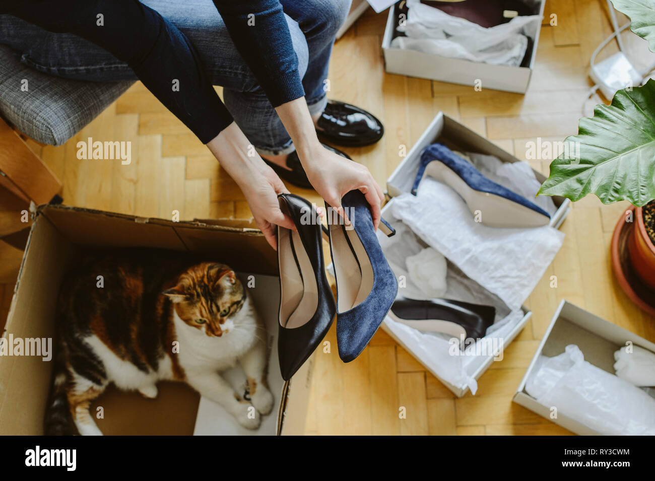 Woman unboxing unpacking several pairs of new shoes bought via online store and curious cat pet inside the box cardboard  - Stock Image
