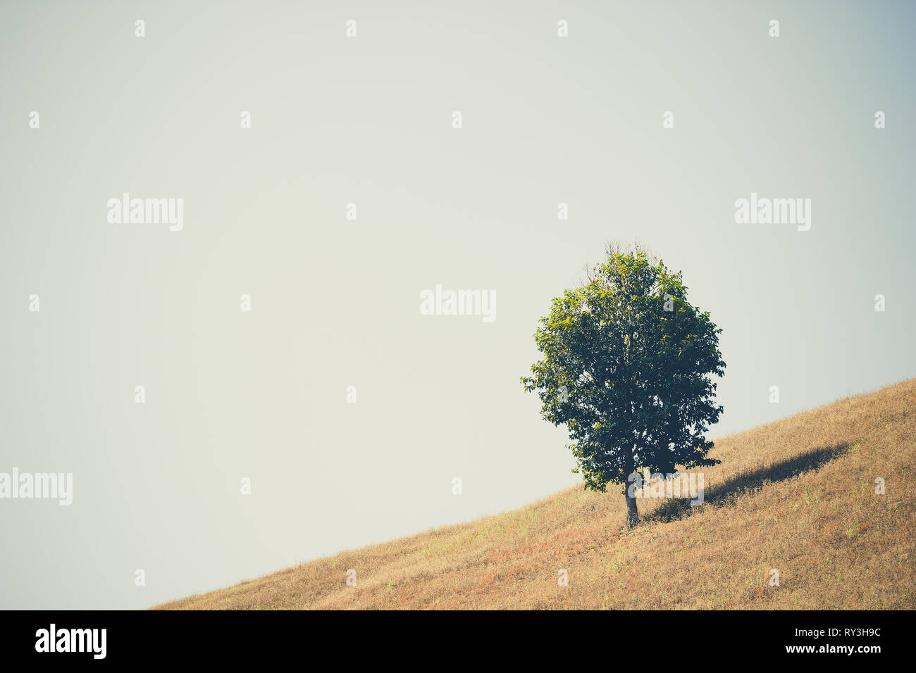 Trees in open space and the sky. The concept of seclusion is truly blissful. Copy spaces for text. - Stock Image