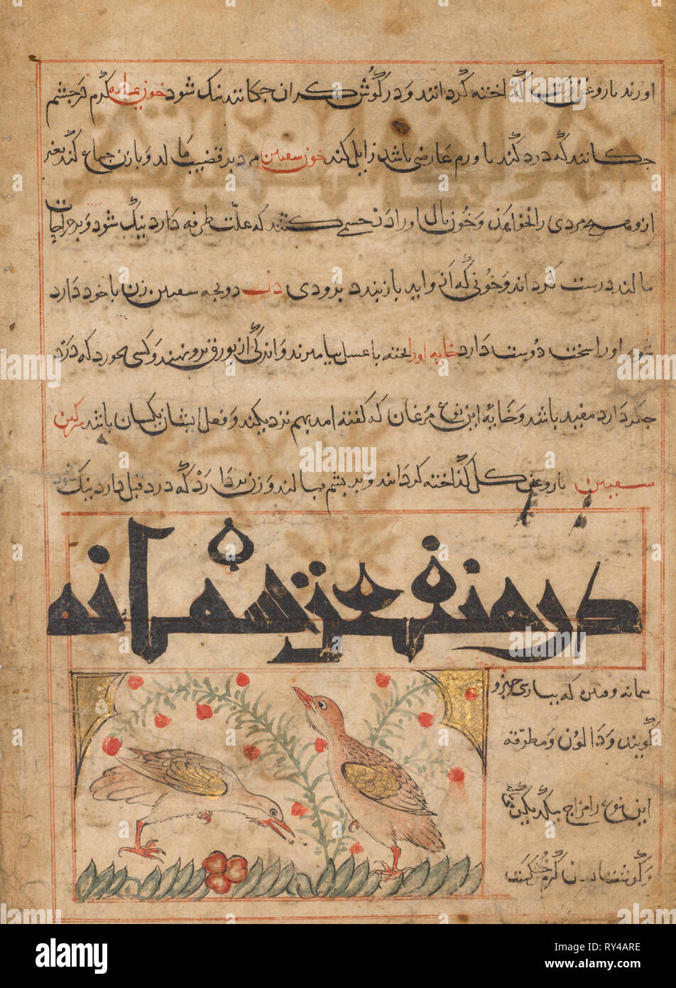 On the Benefits of Quails (verso) from a Manafi' al-Hayawan (On the Usefulness of Animals) of Ibn Bakhtishu' (d. 1058), c. 1300. Iran, probably Maragah, Ilkhanid period (1256-1353). Opaque watercolor, ink, and gold on paper; image: 10.7 x 6 cm (4 3/16 x 2 3/8 in.); overall: 24.7 x 18.2 cm (9 3/4 x 7 3/16 in.); text area: 22.5 x 16.5 cm (8 7/8 x 6 1/2 in - Stock Image