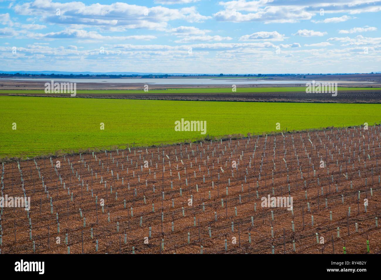 Cultivation field. Manjavacas, Cuenca province, Spain. - Stock Image
