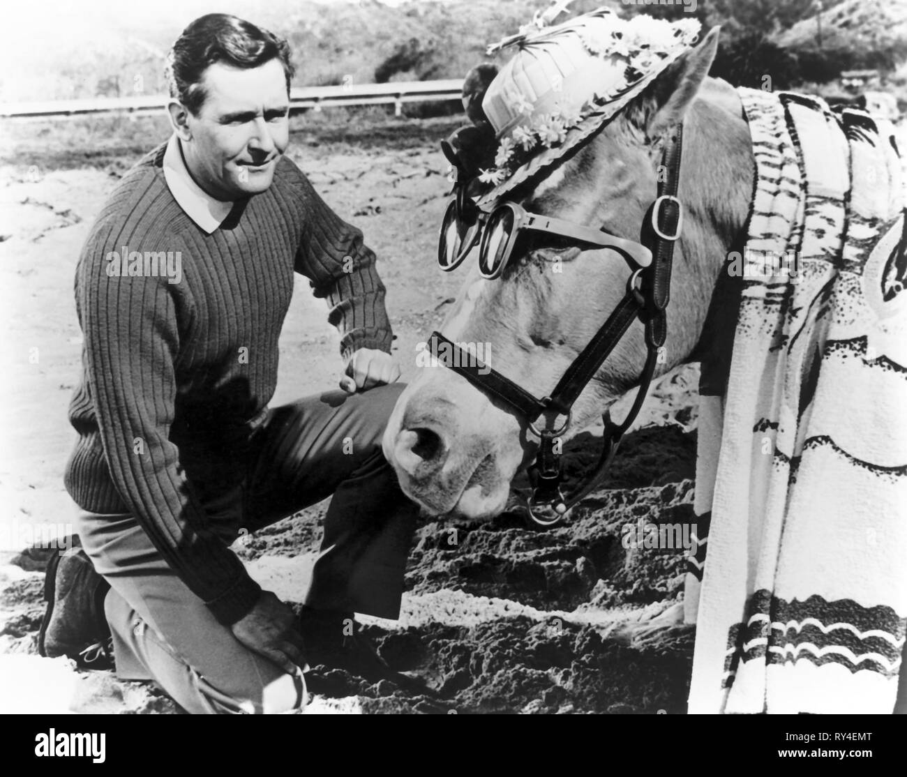 ALAN YOUNG,MISTER ED, MISTER ED, 1961 - Stock Image