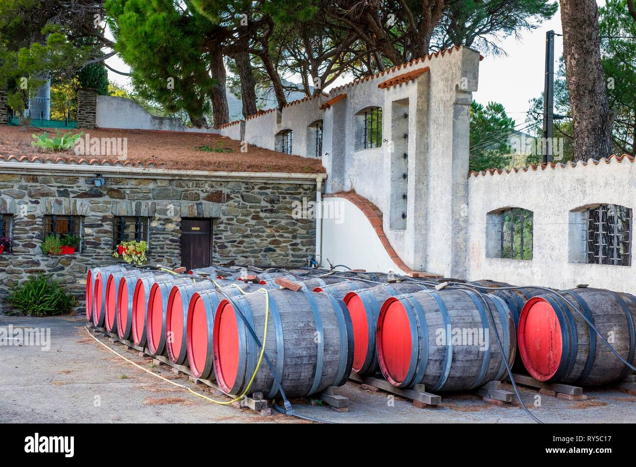 France, Pyrenees Orientales, Cote Vermeille, Banyuls-sur-Mer, the cellar of Terres des Templiers vineyard (AOC Banyuls and Collioure) - Stock Image
