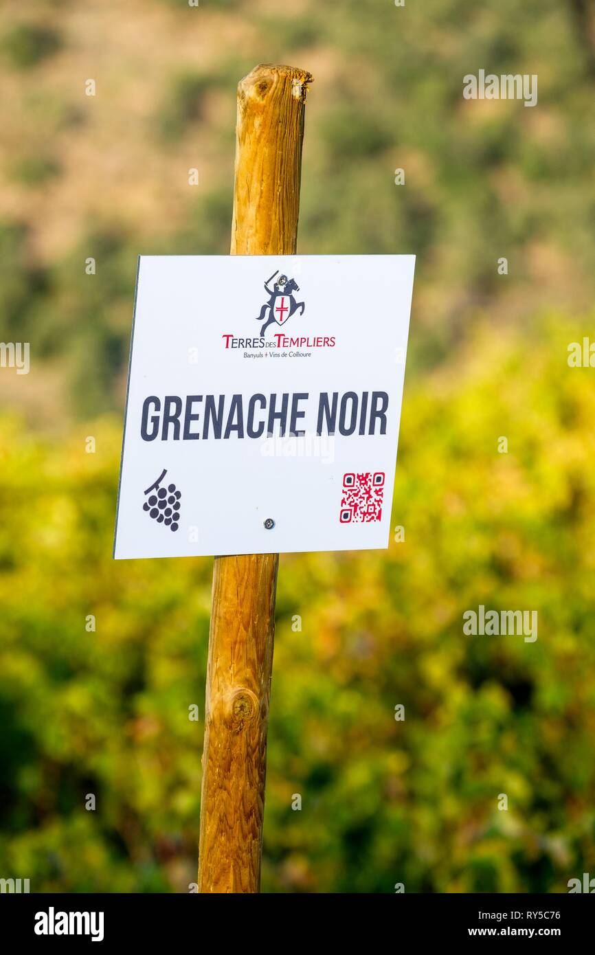 France, Pyrenees Orientales, Cote Vermeille, Banyuls-sur-Mer, Terres des Templiers vineyard (AOC Banyuls and Collioure) - Stock Image