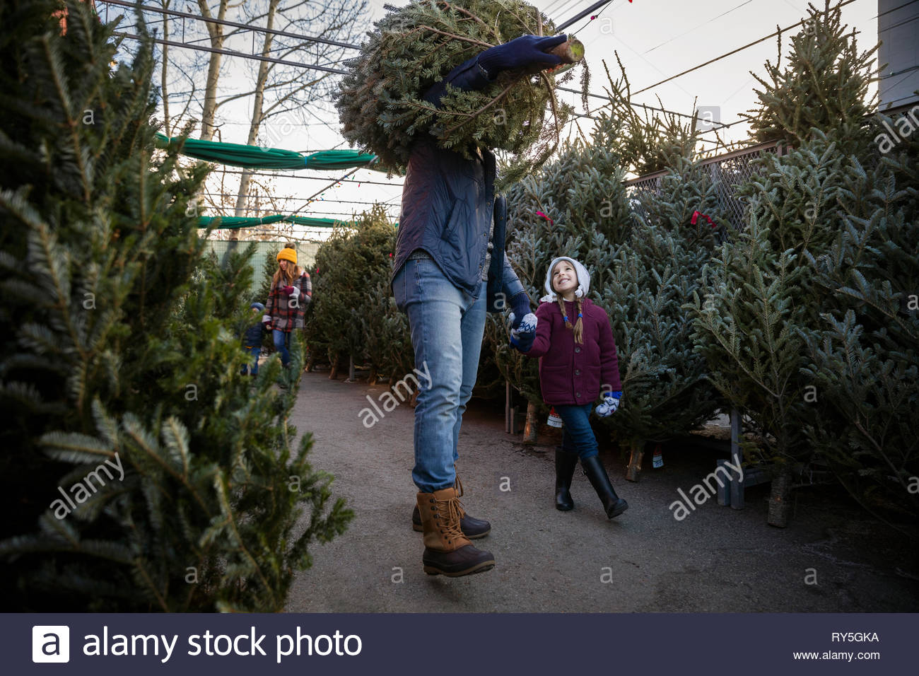 Father and daughter carrying christmas tree at christmas market - Stock Image