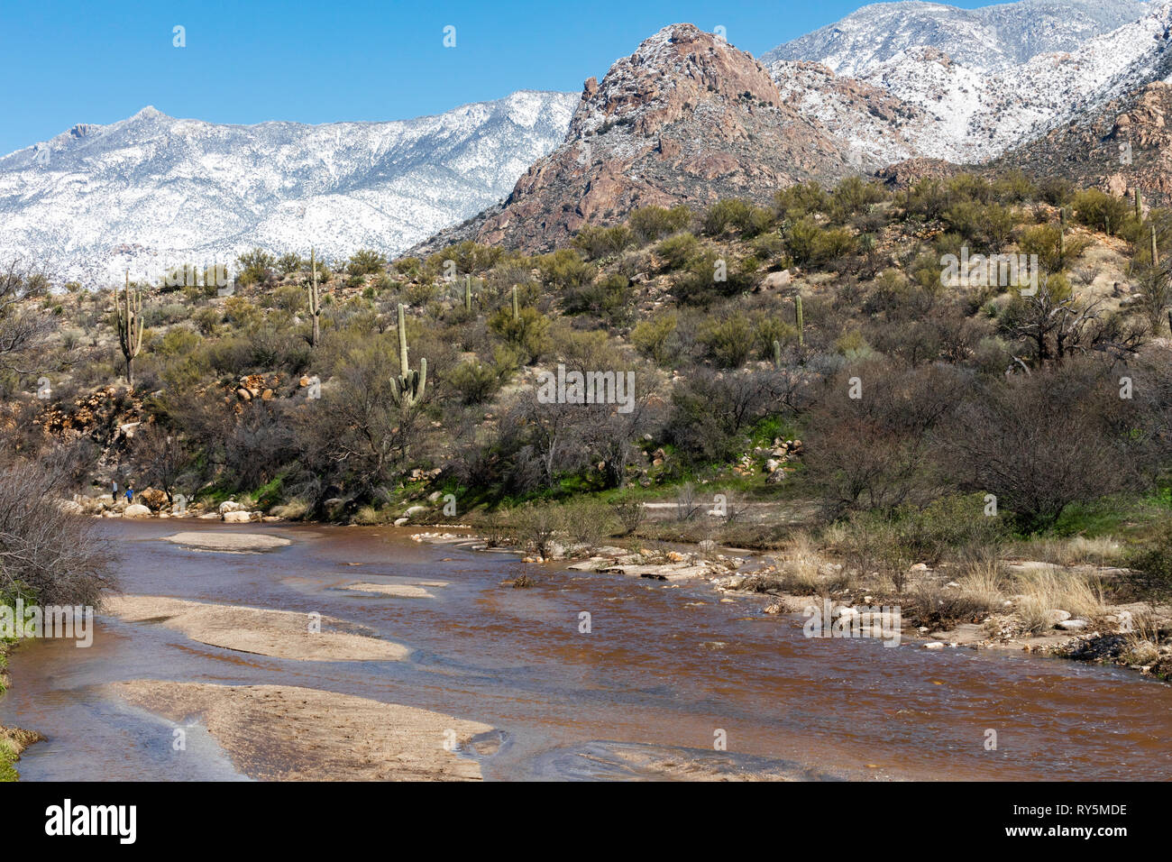 Sutherland Wash flowing after a winter storm, snow on the Santa Catalina Mountains in the distance, Catalina State Park, Tucson, Arizona - Stock Image