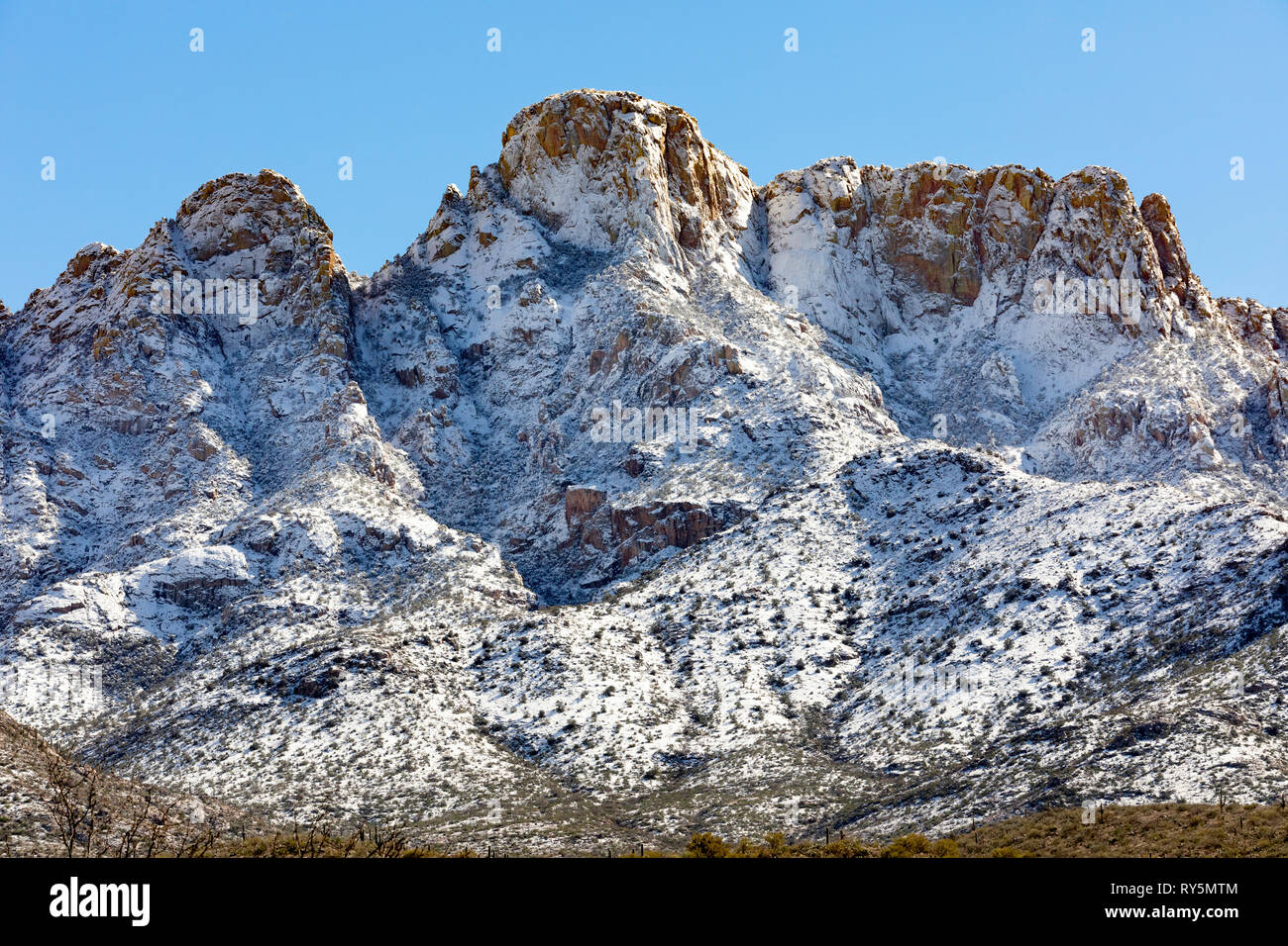 Fresh snowfall Pusch Ridge, Santa Catalina Mountains, Catalina State Park, Tucson, Arizona - Stock Image