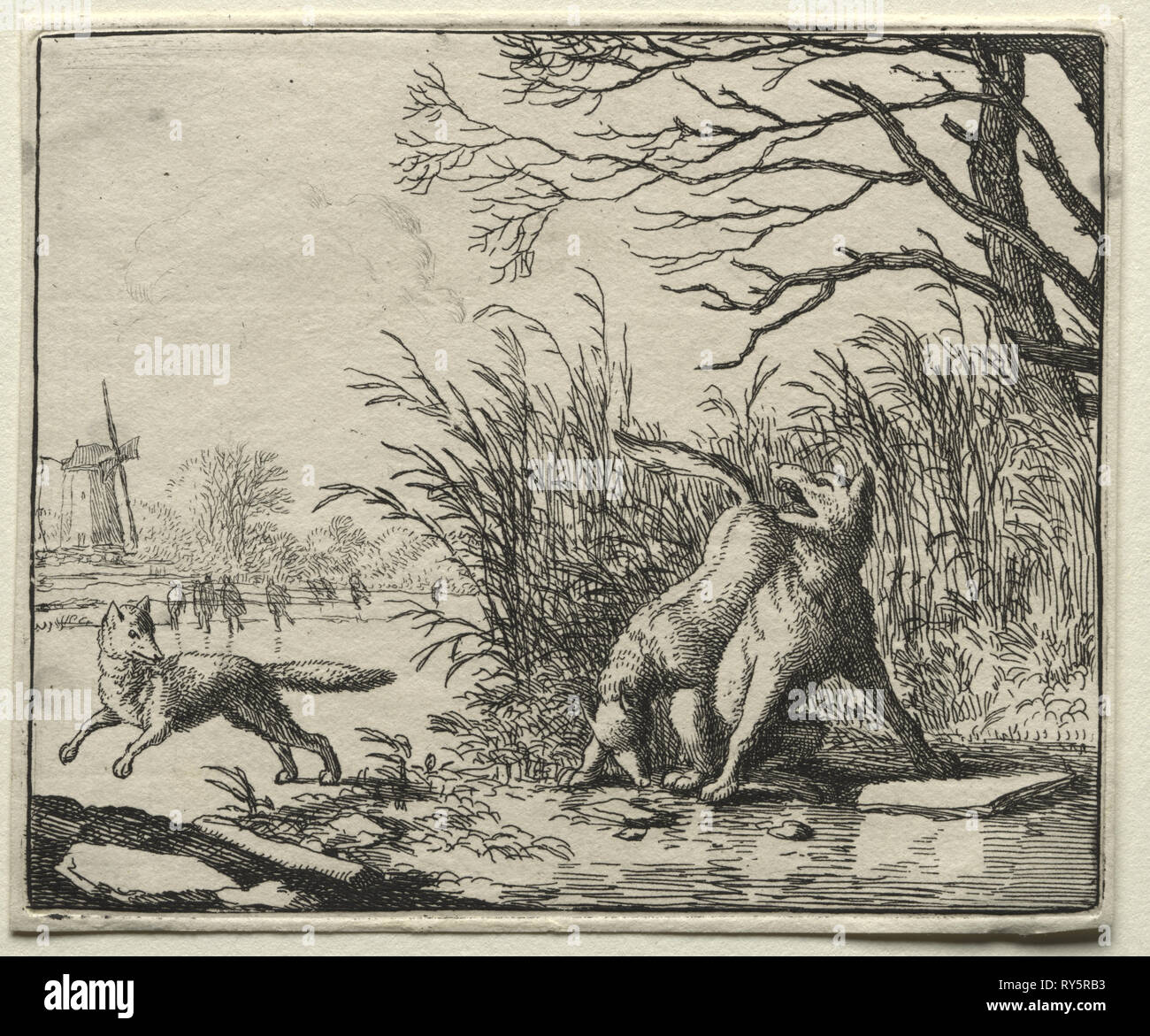 Reynard the Fox:  A New Accusation by the Wolf. Allart van Everdingen (Dutch, 1621-1675). Etching - Stock Image