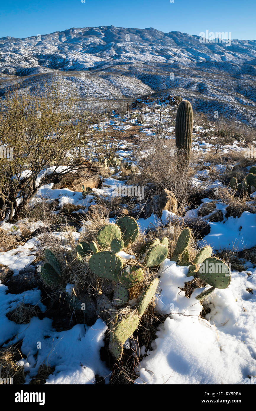 Rincon Mountains with fresh snow and cactus, Redington Pass, Tucson, Arizona Stock Photo