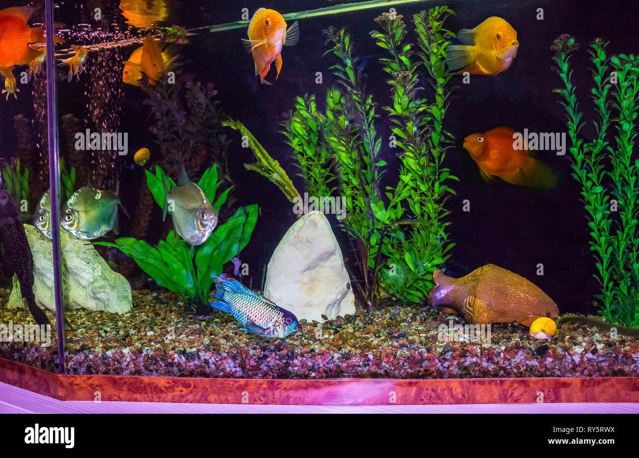 close up of aquarium tank full of fish - Stock Image
