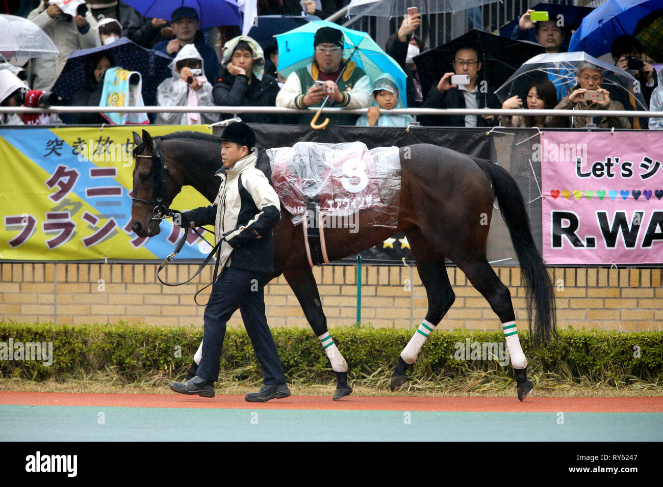 Aichi, Japan. 10th Mar, 2019. Air Windsor Horse Racing : Air Windsor is led through the paddock before the Kinko Sho at Chukyo Racecourse in Aichi, Japan . Credit: Eiichi Yamane/AFLO/Alamy Live News - Stock Image