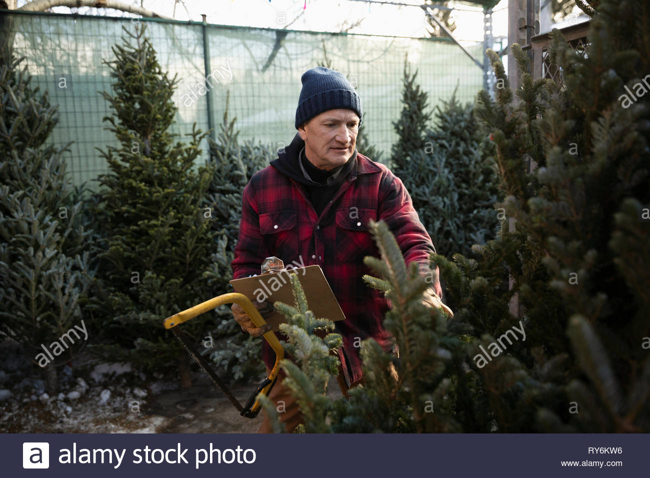 Worker with clipboard and saw inspecting christmas tree at christmas market - Stock Image