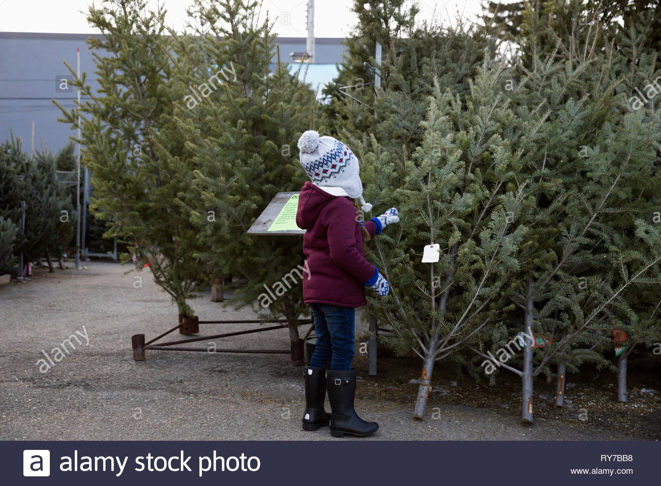 Curious girl touching small christmas tree at christmas market - Stock Image