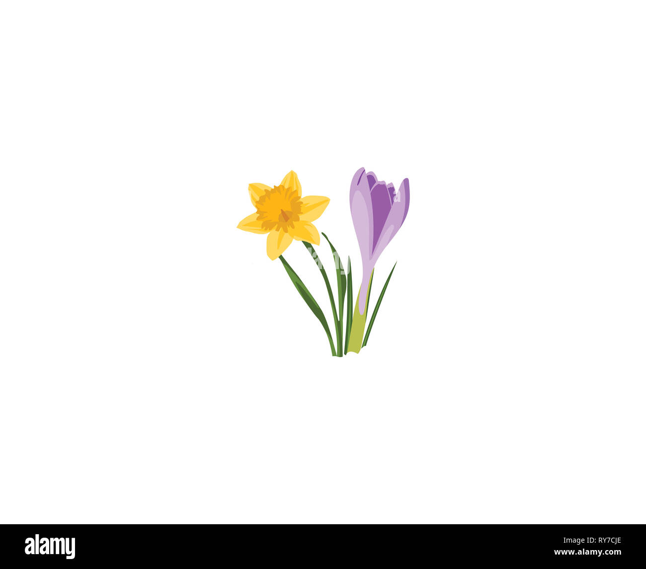 Seamless border with spring flowers. Narcissus and Crocus. Botanical illustration. Colorful. Stock Photo