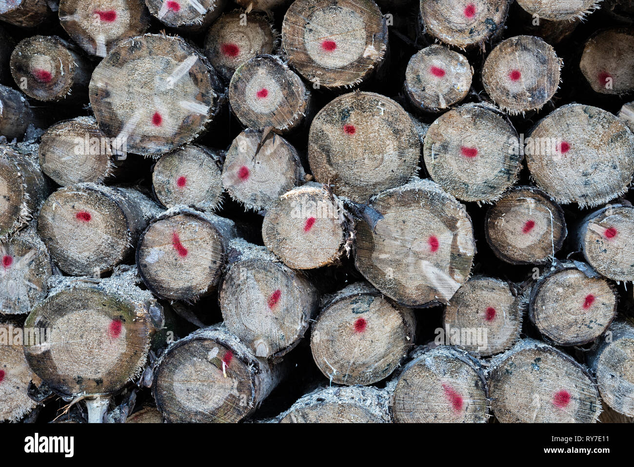 Forestry after Cyclone Friederike, near Oberweser, Weser Uplands, Weserbergland, Hesse, Germany - Stock Image