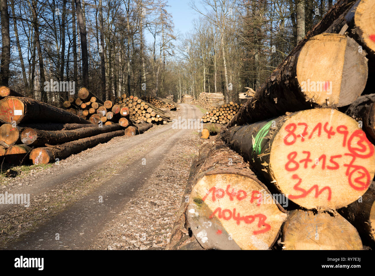 Forestry after Cyclone Friederike, near Oberweser, Weser Uplands, Weserbergland, Hesse, Germany Stock Photo