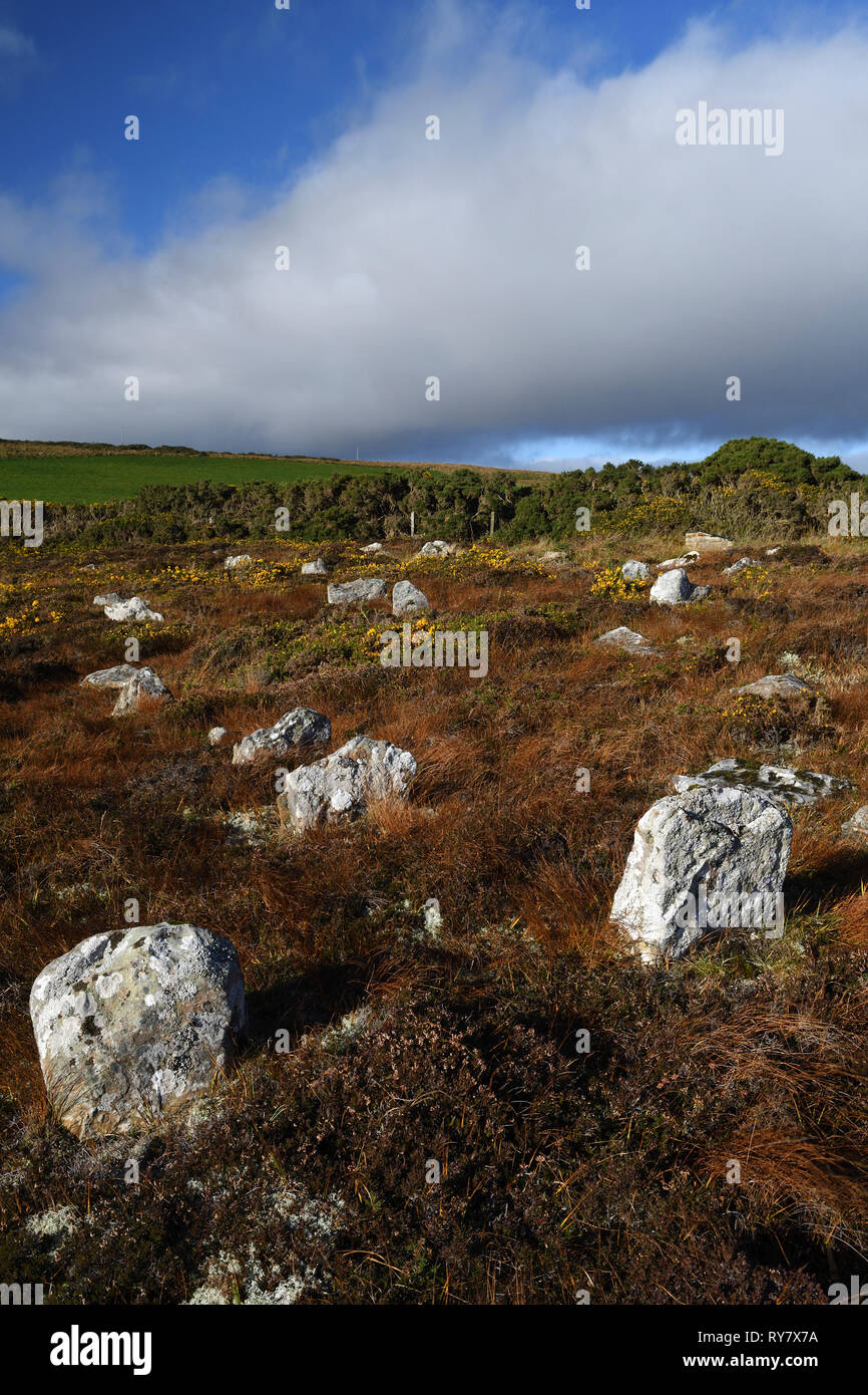 hill o'many stanes;stone row;mid-clyth;caithness;scotland - Stock Image