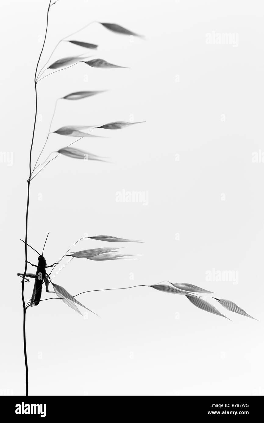 Pictorial photo of dragon-fly hanging on twig on white background - Stock Image
