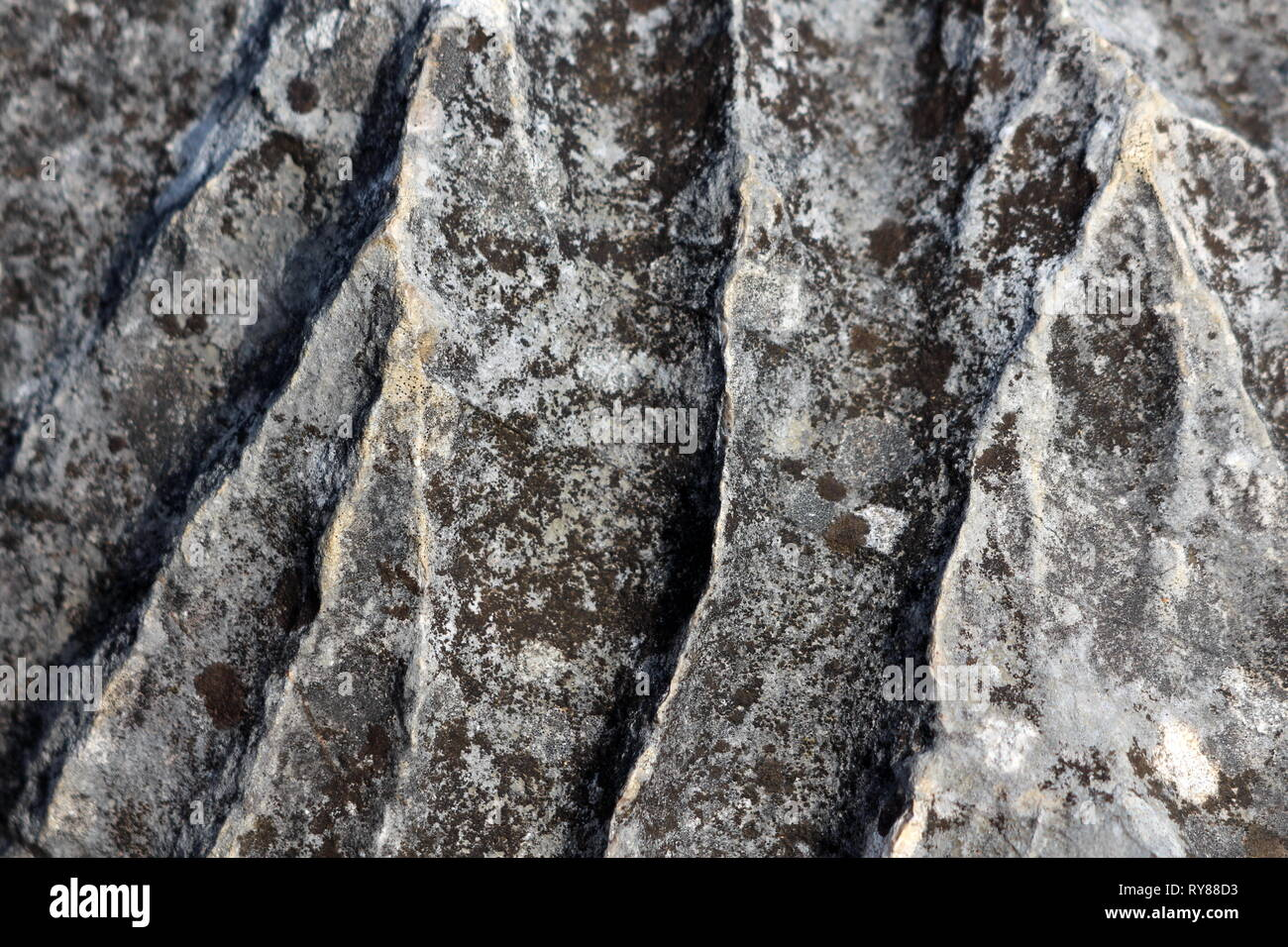 Texture wallpaper of old aged dark grey massive rock with moss patches on warm sunny spring day - Stock Image