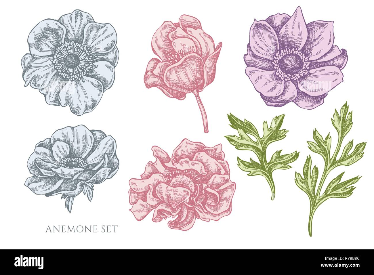 Vector collection of hand drawn pastel anemone - Stock Vector