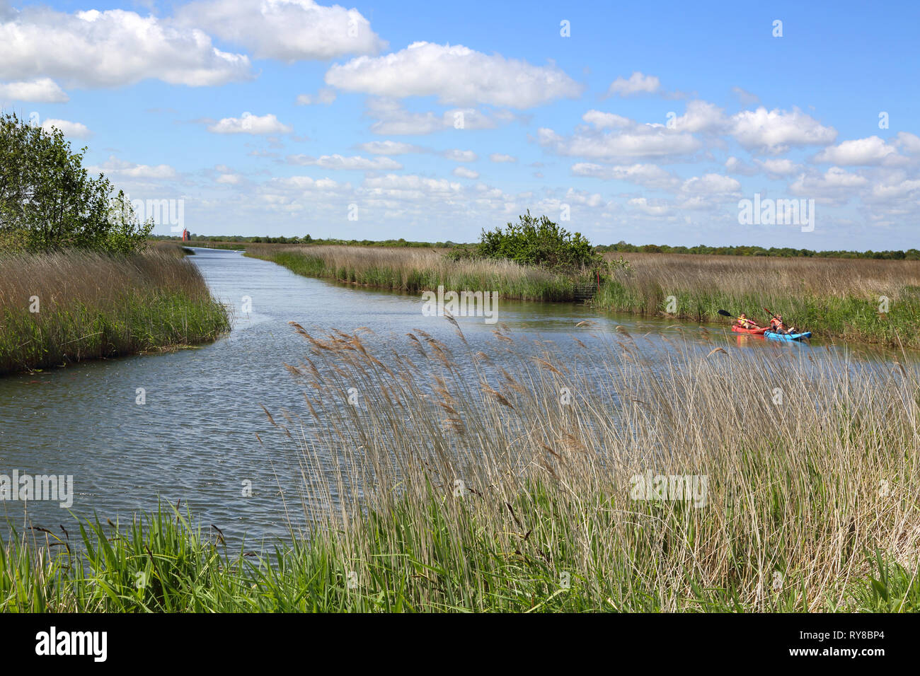 canoeing on martham broad near west somerton in Norfolk - Stock Image