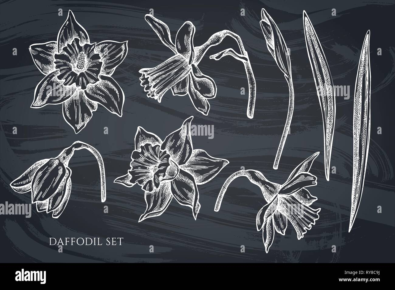 Vector collection of hand drawn chalk daffodil Stock Vector
