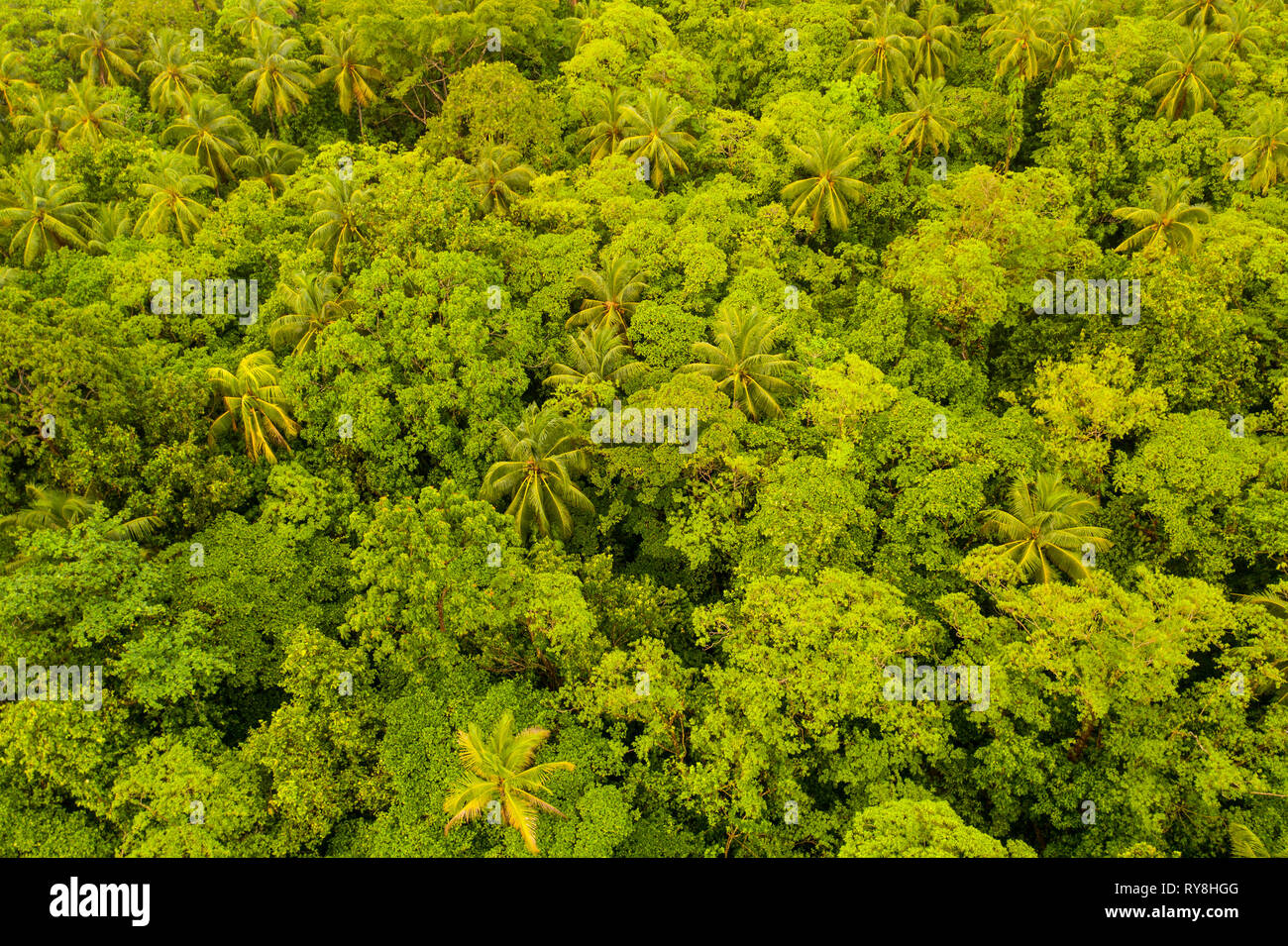 Aerial view of the lush rainforest canopy in Papua New Guinea. This region harbors extraordinary biodiversity. - Stock Image