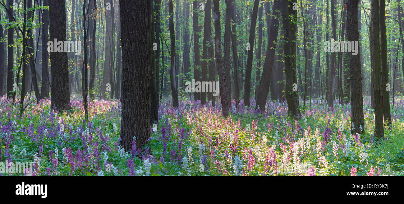 Landscape view. Spring in the forest. The first flowers Stock Photo