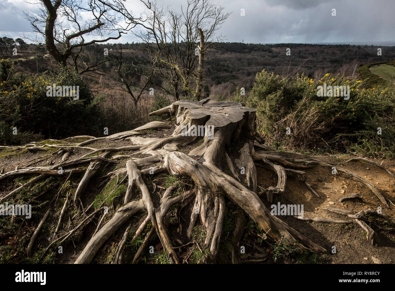 Devil's Punch Bowl, 282.2-hectare biological Site of Special Scientific Interest east of Hindhead in Surrey, England, United Kingdom - Stock Image