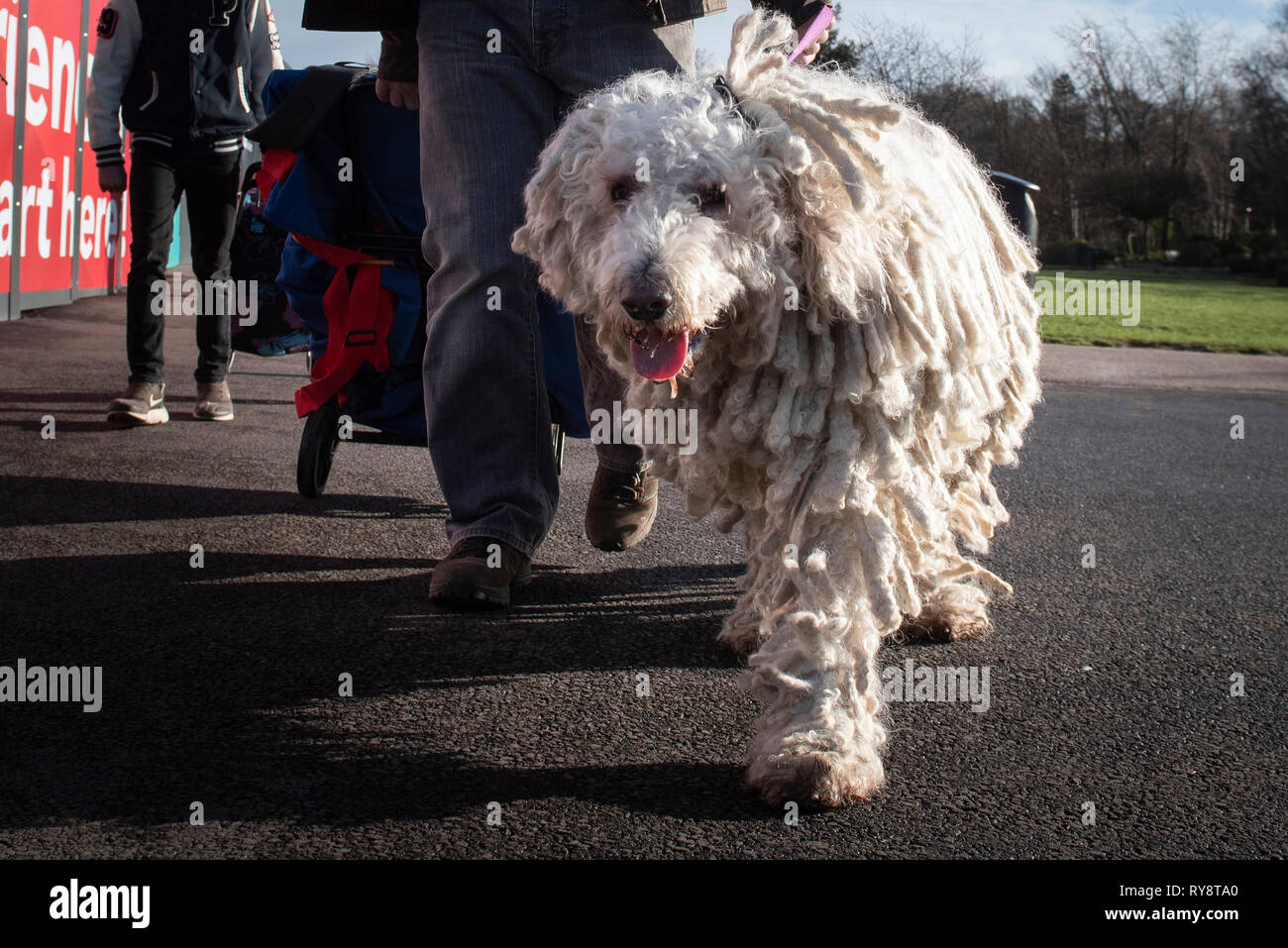NEC, BIRMINGHAM, ENGLAND, UK. 7th MARCH 2019.  / First held in 1891, Crufts is said to be the largest show of its kind in the world, the annual four-d - Stock Image