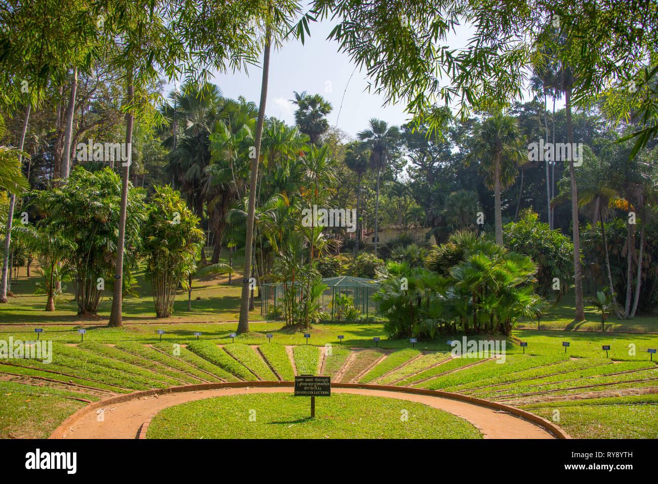Asia, Sri Lanka, Kandy, Royal Botanic Garden Peradeniya - Stock Image