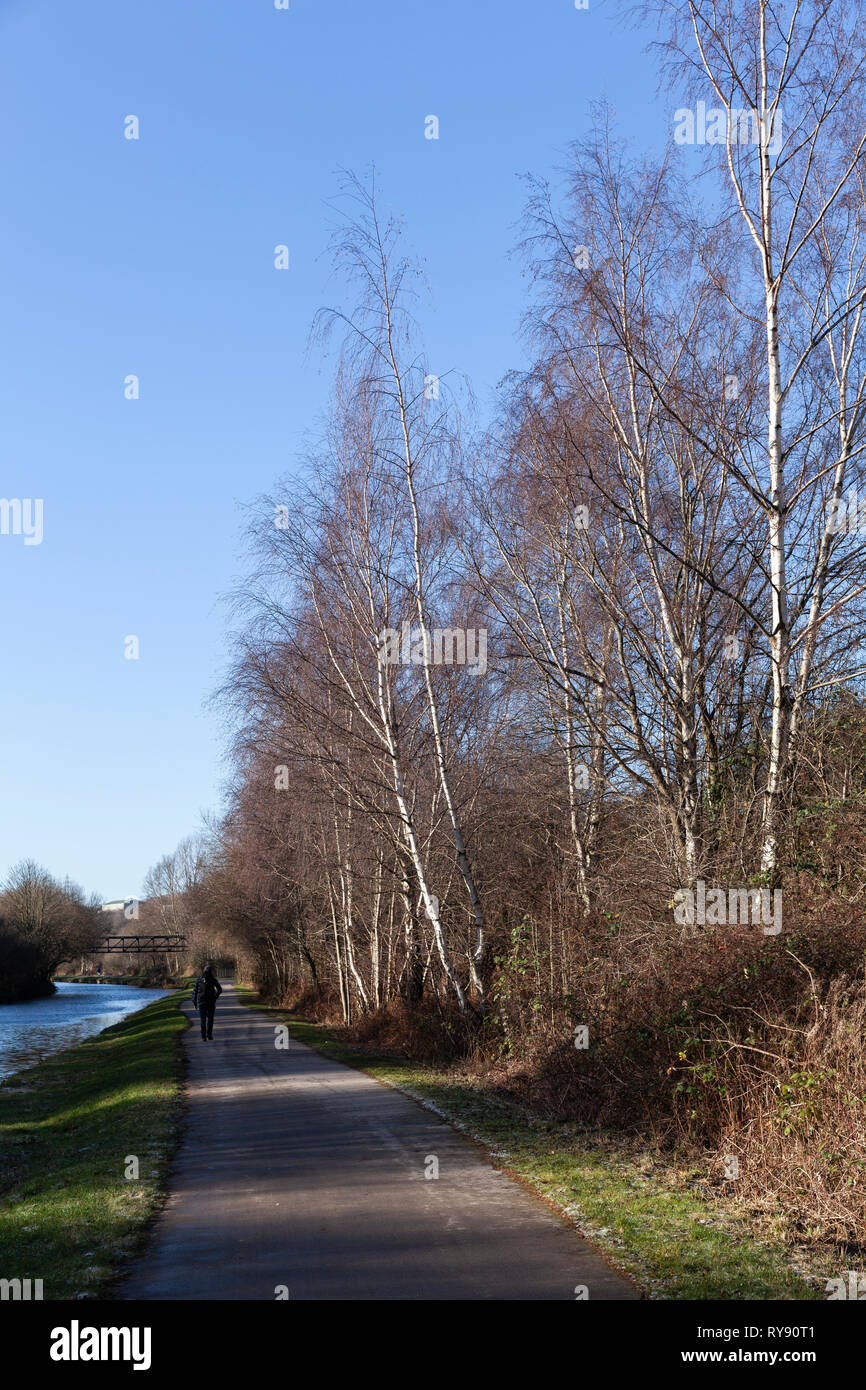 Looking down the towpath on the Sheffield to Keadby canal new cut. Rotherham. - Stock Image