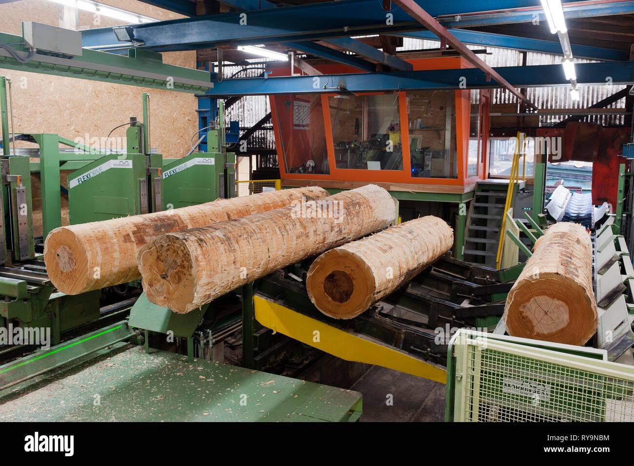 Logs on conveyor belt at lumber factory - Stock Image