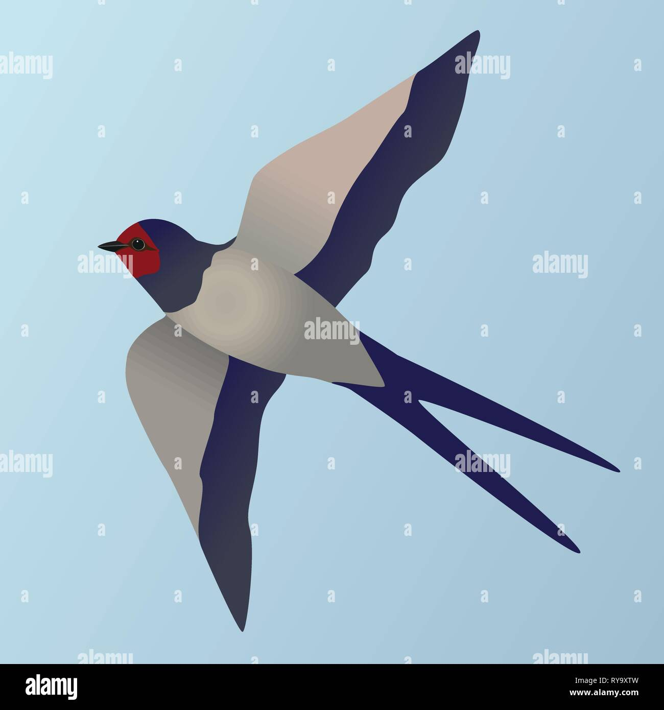 An illustration of a flying farmers swallow - Stock Vector