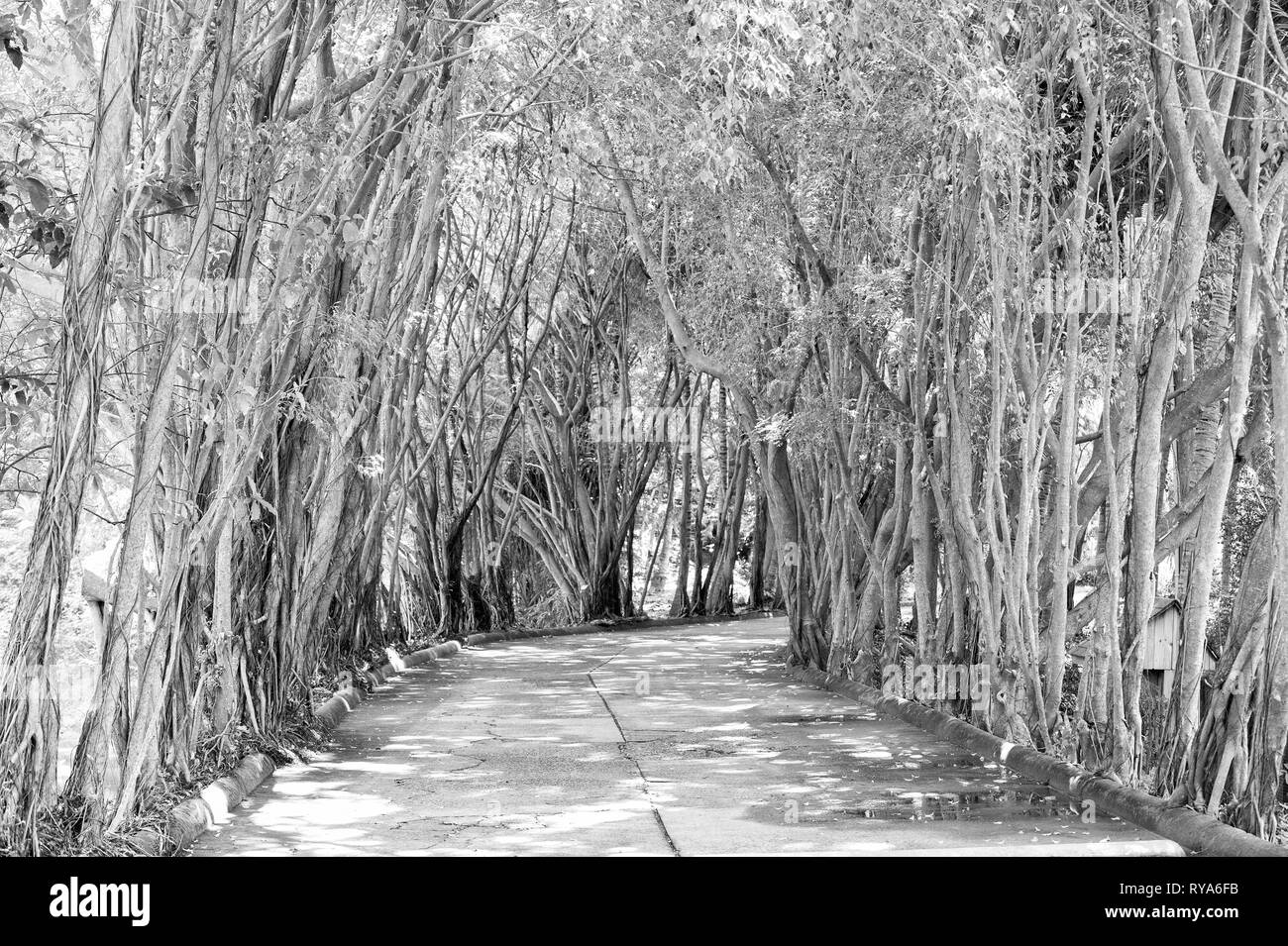 Alley road in jungle park of fresh bright green tropical plants or trees sunny day outdoor Stock Photo