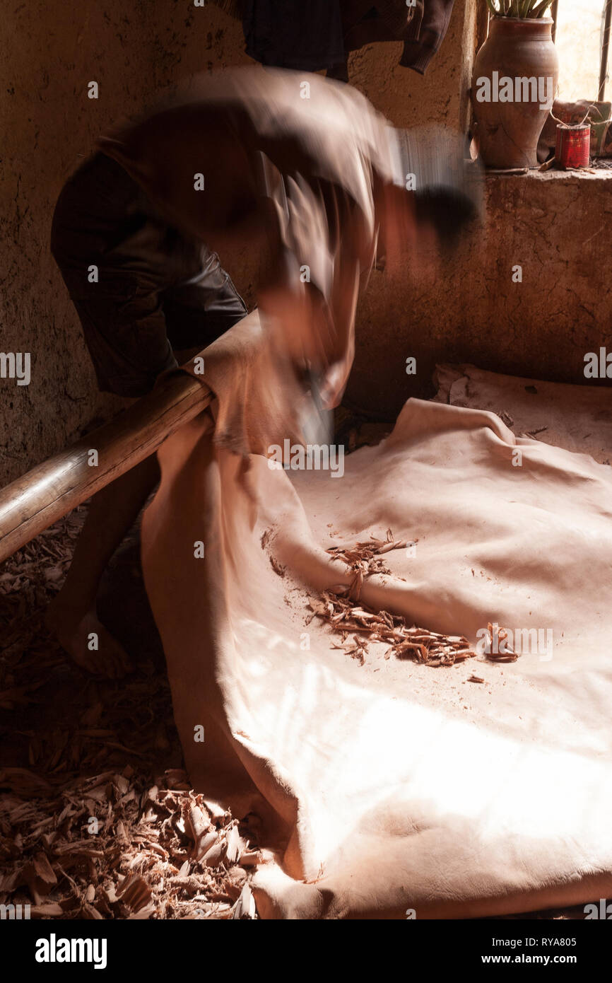 Skinner manually processes the skin of the animal. - Stock Image
