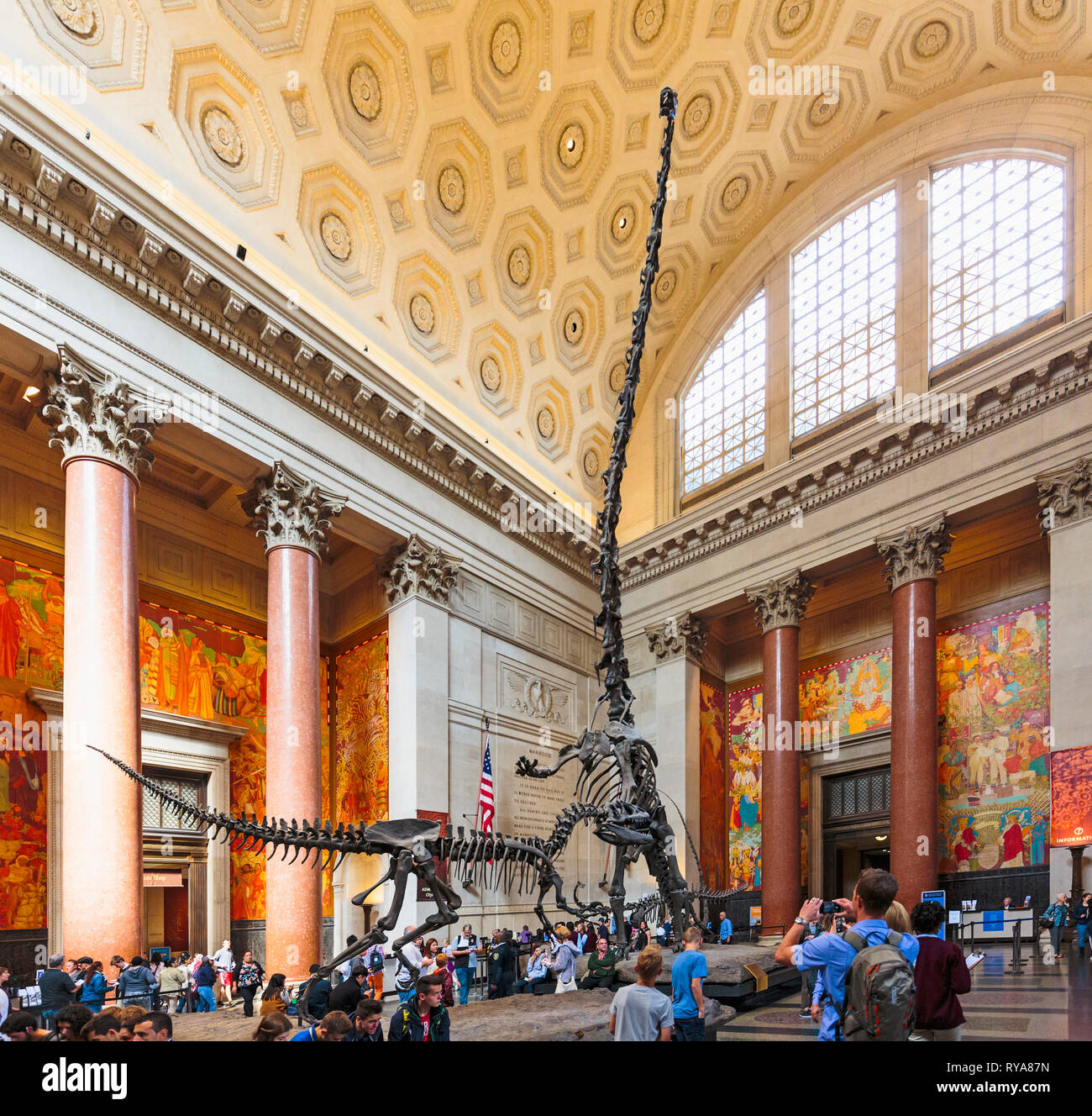 Theodore Roosevelt Rotunda,  American Museum of Natural History.   Two dinosaurs fight.  A Barosaurus rears up to protect its young from an attacking  - Stock Image